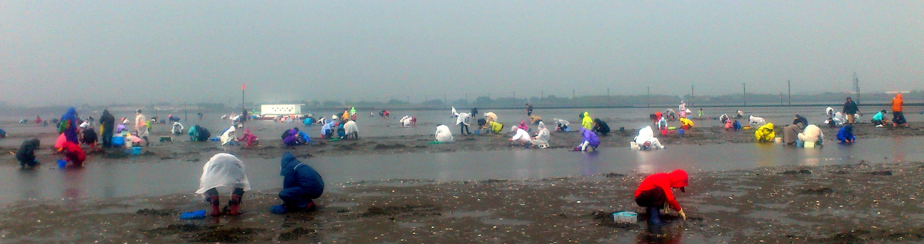 大雨の中、第15回団結潮干狩り大会 江川海岸(5・13)